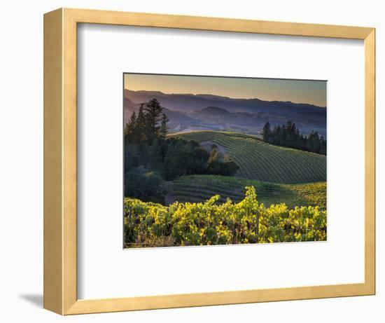 Healdsburg, Sonoma County, California: Vineyard and Winery at Sunset-Ian Shive-Framed Premium Photographic Print