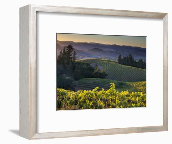 Healdsburg, Sonoma County, California: Vineyard and Winery at Sunset-Ian Shive-Framed Premium Photographic Print