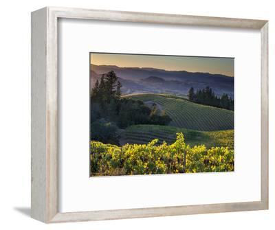 Healdsburg, Sonoma County, California: Vineyard and Winery at Sunset-Ian Shive-Framed Photographic Print