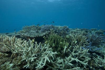 Healthy Corals Cover a Reef in Beqa Lagoon, Fiji-Stocktrek Images-Photographic Print