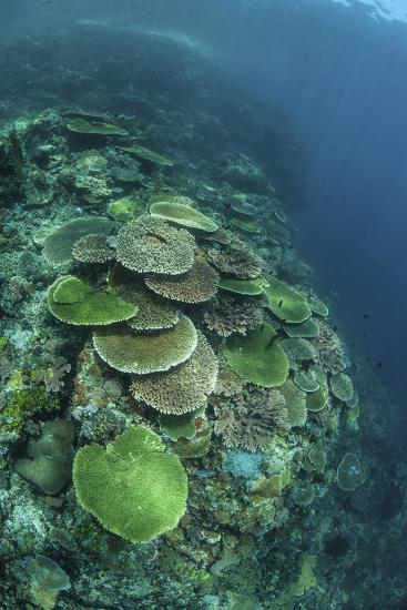 Healthy Reef-Building Corals Thrive in Komodo National Park, Indonesia-Stocktrek Images-Photographic Print