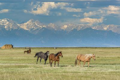 Heard of Horses in Hayfield, San Luis Valley-Howie Garber-Photographic Print