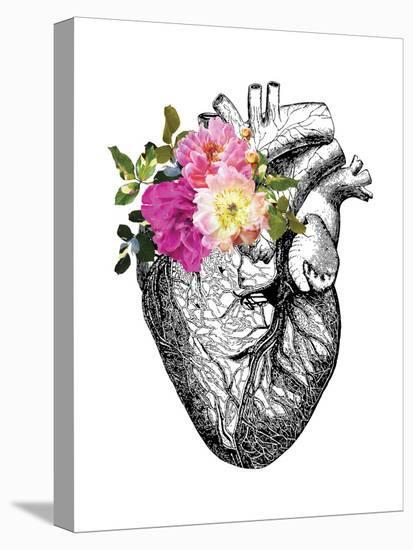 Heart Anatomical Floral-Amy Brinkman-Stretched Canvas Print