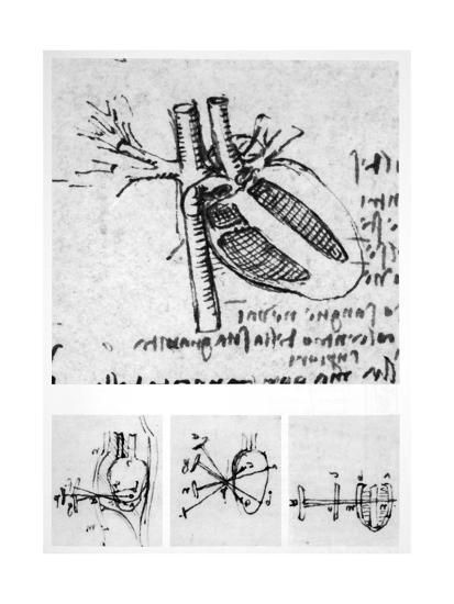 Heart Anatomy, 16th Century-Science Photo Library-Giclee Print