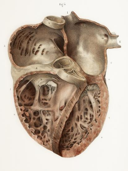 Heart Anatomy, 19th Century Illustration-Science Photo Library-Photographic Print