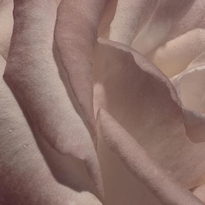 Heart of a Rose VII-Rita Crane-Photographic Print