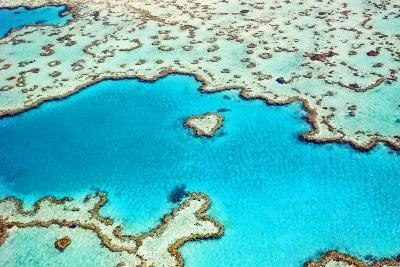 Heart Reef in the Great Barrier Reef Marine Park, Whitsunday Islands, Coral Sea, World Heritage Are-Peter Walton Photography-Photographic Print