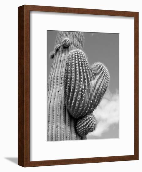 Heart Saguaro B+W-Murray Bolesta-Framed Art Print