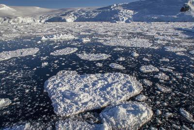 Heart Shaped Ice Near Port Lockroy-David Griffin-Photographic Print