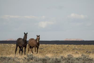 Heat from the Late Summer Sun Distorts and Softens a View of Horses on Blue Moon Bench-Bill Hatcher-Photographic Print