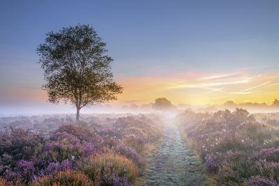 Heath at Dawn-Steve Docwra-Giclee Print
