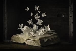 Lepidopterology by Heather Bonadio