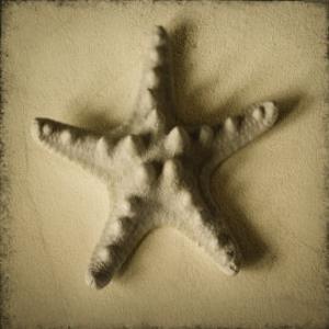 Seashell Study III by Heather Jacks