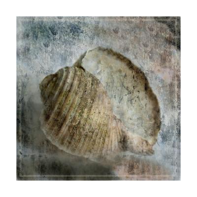 Shell Diary 1