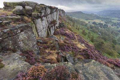 Heather on Curbar Edge at Dawn-Eleanor Scriven-Photographic Print