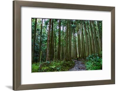 A Person Walks a Path in a Cedar Grove Near Jakkou-In Temple