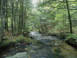 A Woodland View with a Rushing Brook by Heather Perry