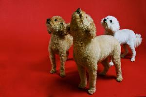 Three Small Dogs Look Up at their Owner by Heather Perry