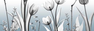 https://imgc.artprintimages.com/img/print/heavenly-botanicals_u-l-f90a5g0.jpg?p=0