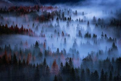 Heavenly Mesmer Fog & Light Trees Sark Yosemite Winter Storm Valley-Vincent James-Photographic Print