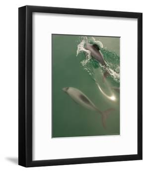 Hectors Dolphin, New Zealand-Tobias Bernhard-Framed Photographic Print