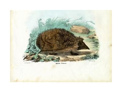Hedgehog, 1863-79-Raimundo Petraroja-Giclee Print