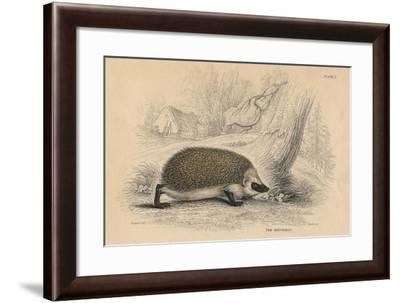 Hedgehog (Erinaceus Europea), 1828--Framed Giclee Print