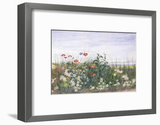 Hedgerow II-Andrew Nicholl-Framed Premium Giclee Print