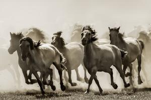 Horse by Heidi Bartsch
