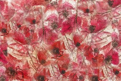 4446_Frozen poppies