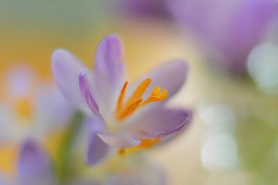 9063_Pastel spring ll