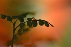 A Gleam of Light by Heidi Westum
