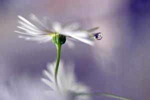 A Tear for the Fallen by Heidi Westum