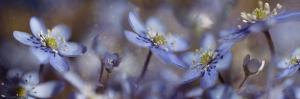 Blue Joy by Heidi Westum