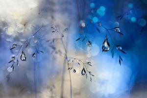 Blue Rain by Heidi Westum
