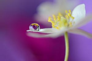 Color Drop Symphony by Heidi Westum