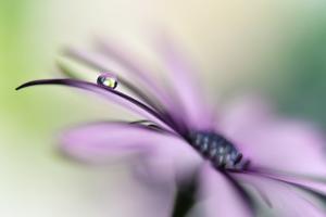 Dreamlike II by Heidi Westum