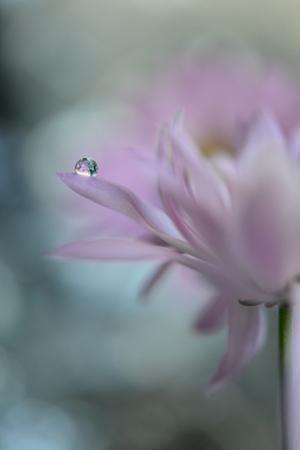 In Pink Delight II by Heidi Westum