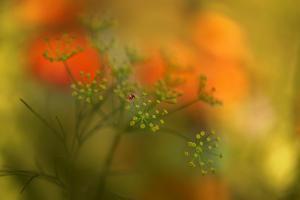 Lady Bug by Heidi Westum