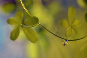 Leaf Necklace by Heidi Westum