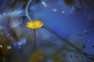 Lights Up in the Dark by Heidi Westum
