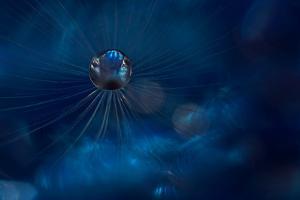 Midnight Blue by Heidi Westum