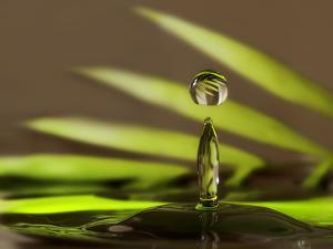 Palm Drops in Chocolate by Heidi Westum