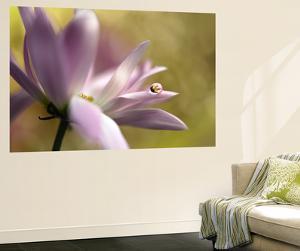 Pink Lily by Heidi Westum