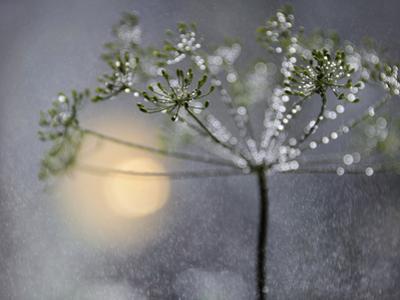 Rainy by Heidi Westum