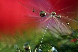 Red Morning II by Heidi Westum