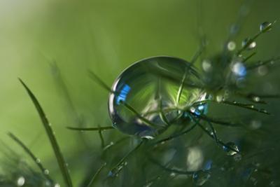 Slightly Blue by Heidi Westum