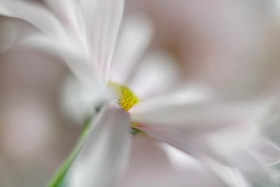 Soft Pink by Heidi Westum