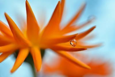Sprawling Orange by Heidi Westum