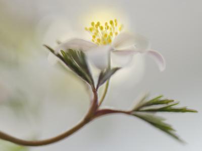 Springtime by Heidi Westum